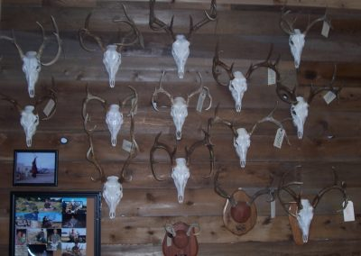 2007_Deer_Season_Mounts_001.MPUQP